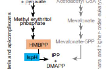 Tiềm năng của một Thế hệ kháng sinh mới:  Kháng sinh miễn dịch tác dụng kép - DAIAs (Dual-Acting Immuno-Antibiotics)