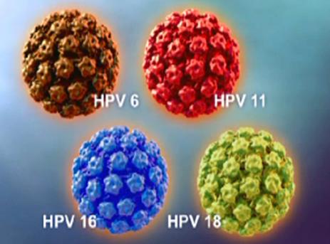 hpv virus la gi
